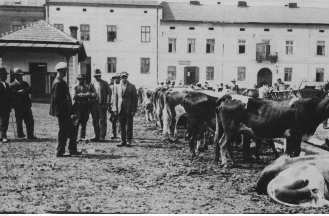 Bydło na sprzedaż na targu w Rzeszowie